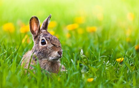 A hop through the history of Easter