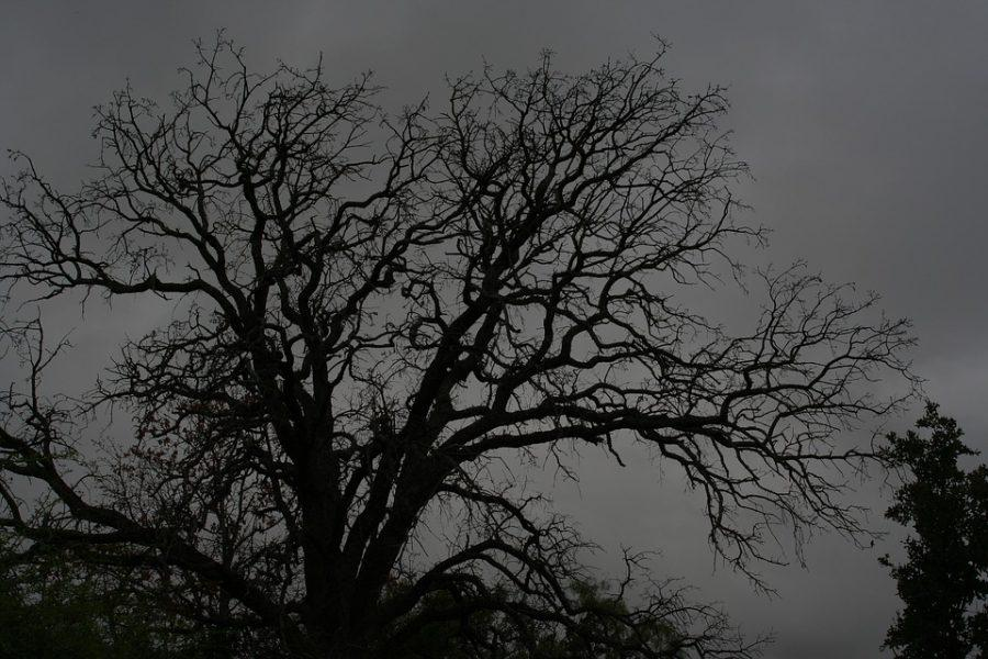 Spooky Old Tree Old Tree Halloween Horror Dark