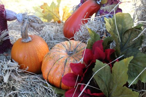 6 different fall activities to try