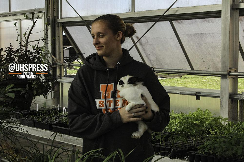 """Focusing on the others students that were making their way into the greenhouse, junior Candice Beske carries one of the rabbits in her hands and prepares to show him off to other students. """"As being one of the ambassadors for the class [agriculture], I work with the animals, inside the greenhouse, I work in the garden outside, I help Hartless create lesson plans and I help teach animal presentations. So I am really, really involved…,"""" Beske said. """"Animals are definitely one of my favorite parts about the class though. I'd for sure pick animals over plants anyday. Like, I've been doing rehabbing since I was three years old, so animals are like the back of my hand. That's why it's fun for me to help students learn and teach them about animals and their body systems, what they eat, how to take care of them, you know if they're sick, what to do and what not to do, kind of thing."""""""