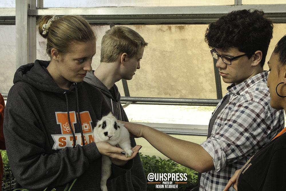"""(From left to right) As the english class moved outside to see more of the greenhouse, junior Candice Beske and sophomore Jackson Howard petted one of the rabbits that was hopping around near its cage. """"My favorite part about going down to the agriculture room was probably holding the animals like the snake and the ferret,"""" Howard said. """"And I also loved it when the ferret crawled around in someone's backpack. I thought that was adorable… When I was down there though, I didn't learn anything new, but I know an okay amount about agriculture and animals and things to get the idea. But overall, it was definitely a great time and I would for sure do it again."""""""