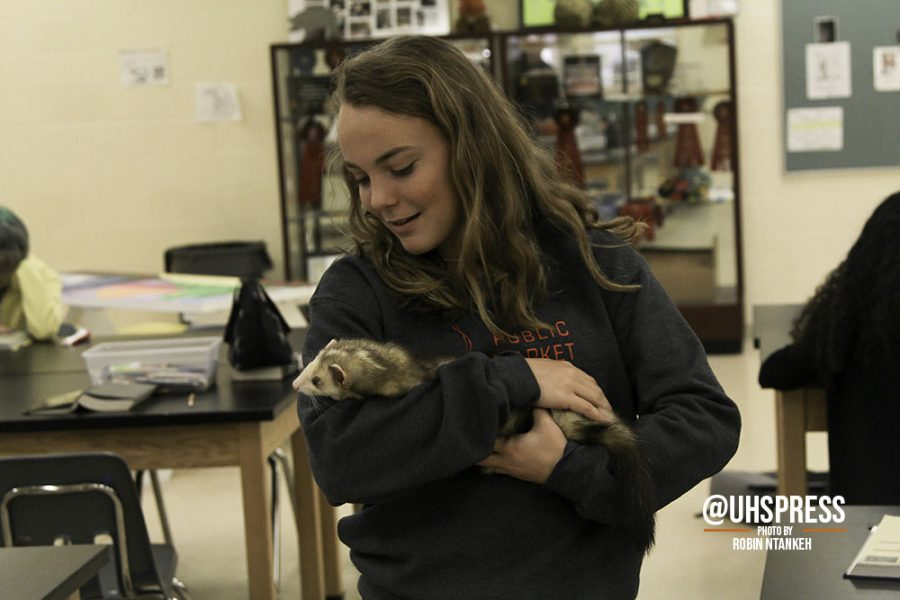 "As the agriculture class ferret, OG, snuggles in junior Maddie Leakes' arms, she holds the furry animal close to her chest as she gently rocks him back and forth with care. ""The ferret is definitely my favorite animal in the class,"" Leake said. ""He's so energetic and so fun to play with. Really just being around all these animals warms my heart and encourages me to continue my pursuit of becoming a vet one day."""