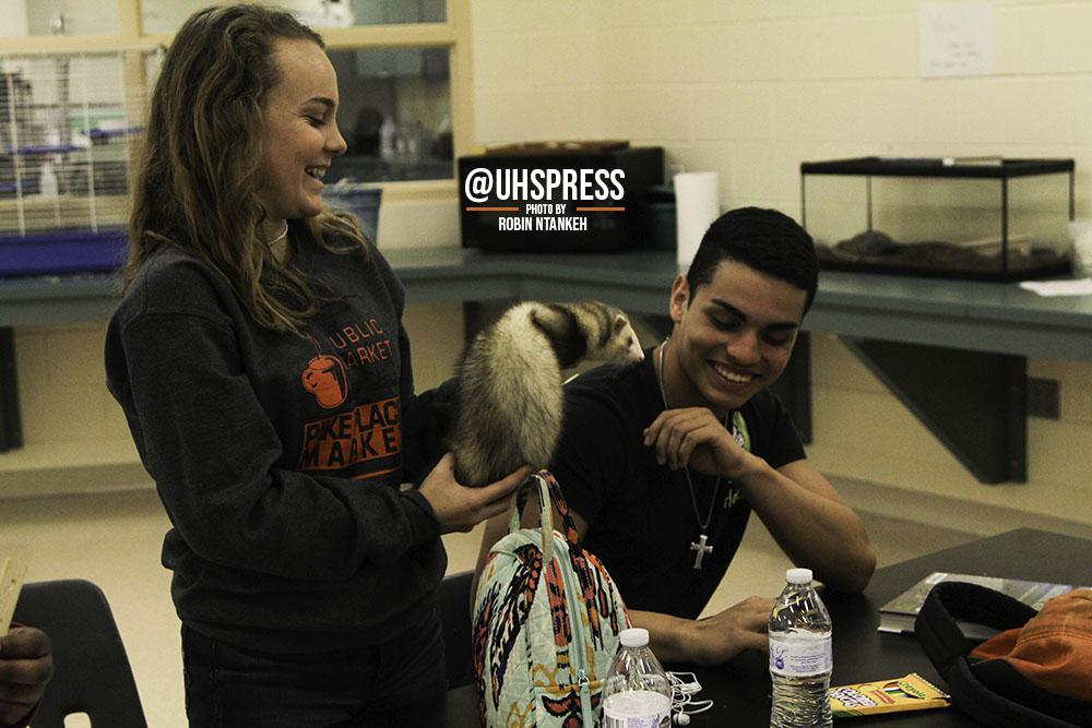 """(From left to right) Before the third bell rang that day, juniors Maddie Leake and Luis Rodriguez fiddle around with the ferret at their table. """"Usually, the agriculture class takes out most of the animals and we just mess with them,"""" Rodriguez said. """"There's about four or five during the day, but they usually bring out a lot more animals than these. But, my favorite part about the class is mostly hanging out with the animals anytime we're doing notes and stuff. They really just brighten up my day sometimes and are just cool to play with. Like how many times can you say you've played with a pet rabbit while doing your homework?"""""""